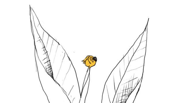Franc Bud sketch